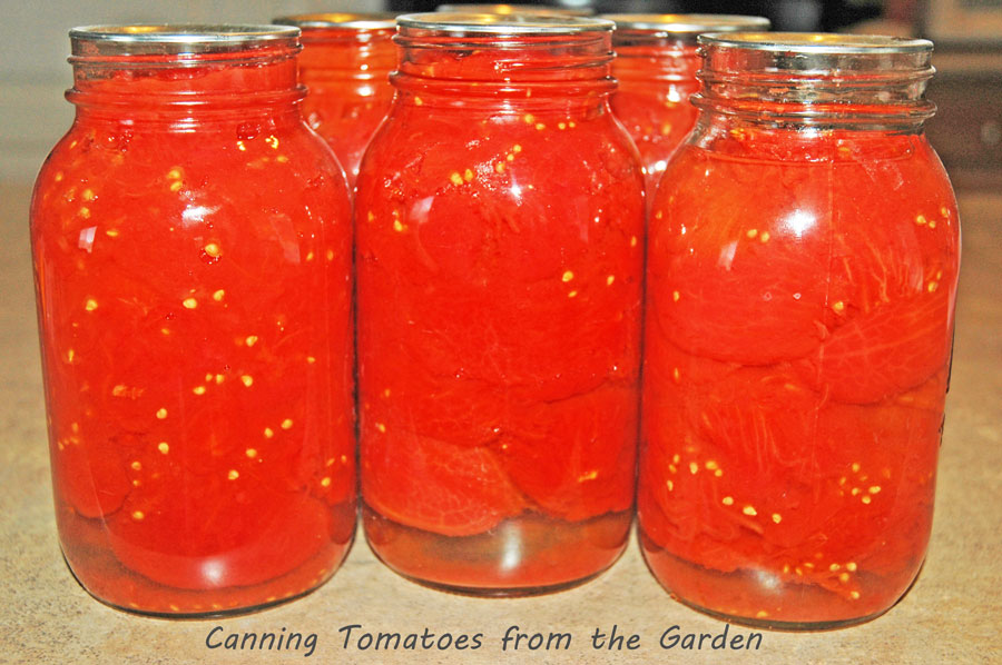 canning and preserving tomatoes