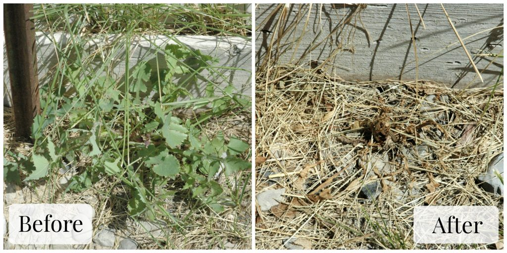 Homemade Weed Killer Collage Photo 1 Final
